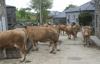 Las comunidades aut nomas optimistas ante el nuevo - Mediorural xunta es oficina agraria virtual ...